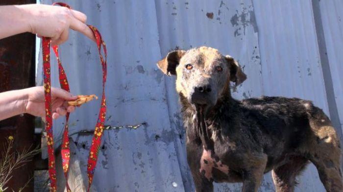Спасение несчастной бездомной собаки (11 фото)