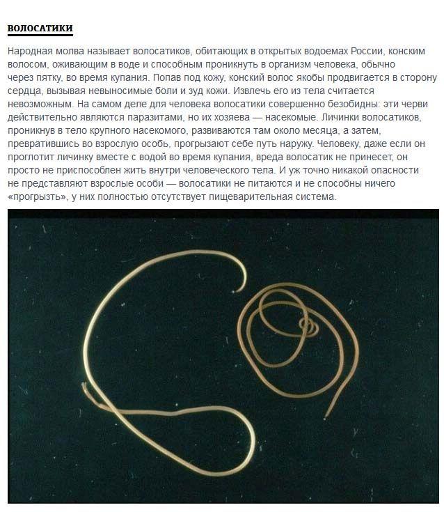 Жуткие обитатели водоемов России (5 фото)