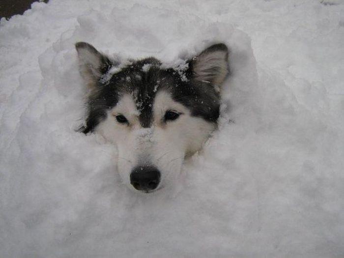 Пес, воспитанный кошками (16 фото)