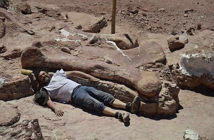 Кости крупнейшего создания, обитавшего на нашей планете (11 фото)