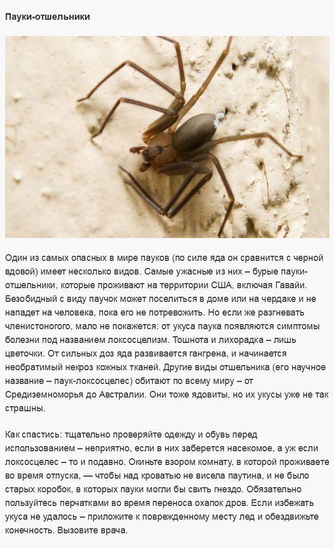 Самые опасные создания, которые могут испортить вам отпуск (8 фото)