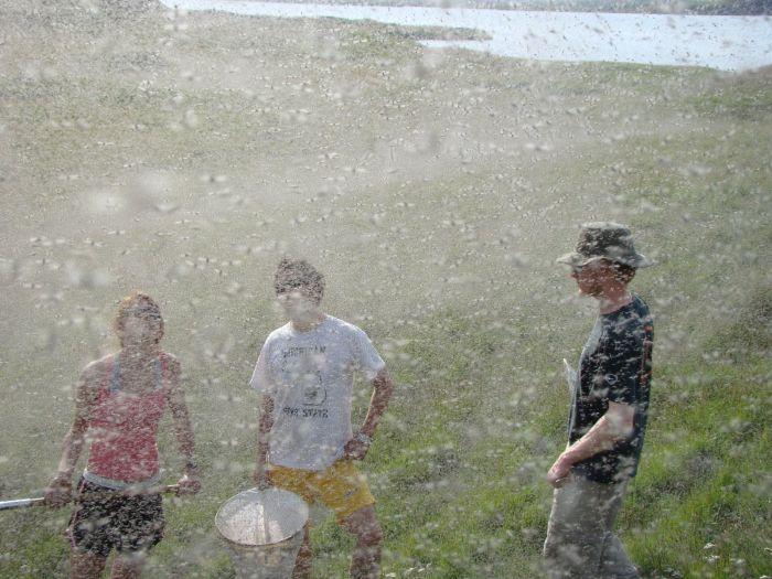 Нашествие комаров в Висконсине (20 фото)