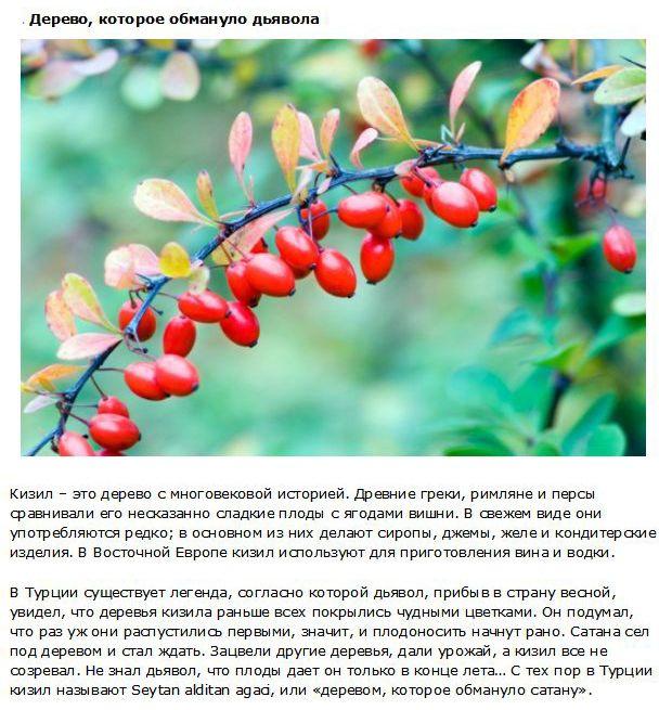 Факты о фруктах, которые нужно знать каждому (10 фото)