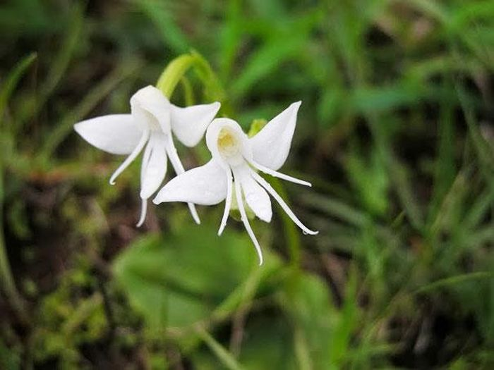"""Необычные цветы, которые научились """"притворяться"""" (36 фото)"""