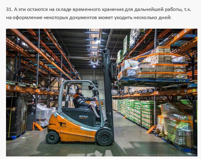 Работа таможни в Домодедово (34 фото)