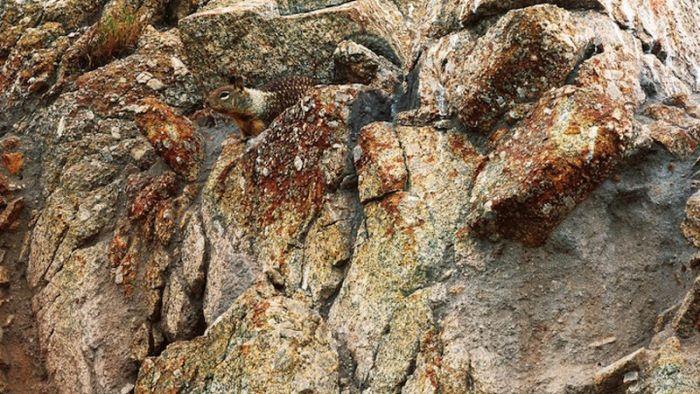 Удивительный природный камуфляж (38 фото)