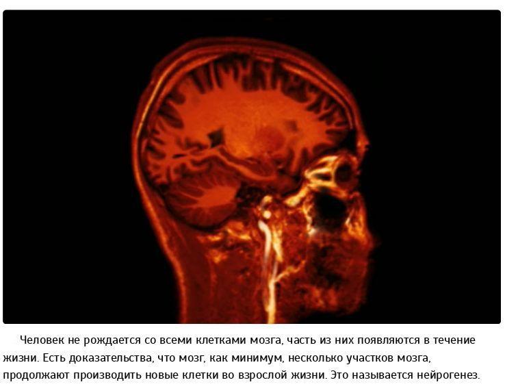 Опровержение общеизвестных научных фактов (35 фото)