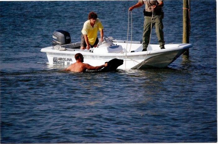 Мужчина спас тонущего в океане медведя (16 фото)