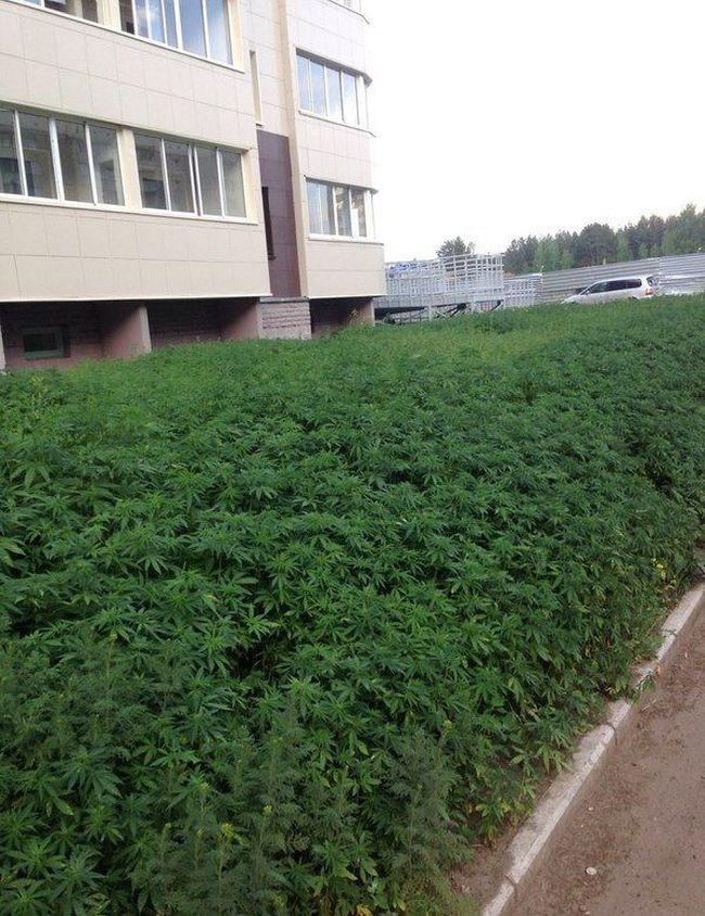 Перепутали семена для газона (2 фото)