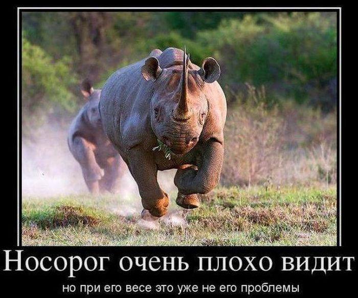 http://trinixy.ru/pics5/20140623/demotivatory_02.jpg