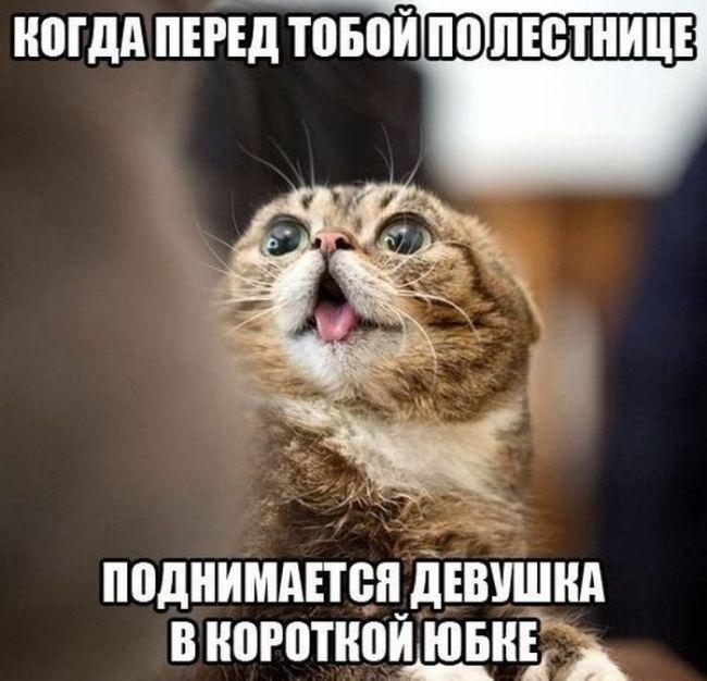 смешные смешные картинки