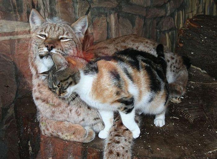 Необычные подруги в зоопарке Санкт-Петербурга (4 фото + видео)