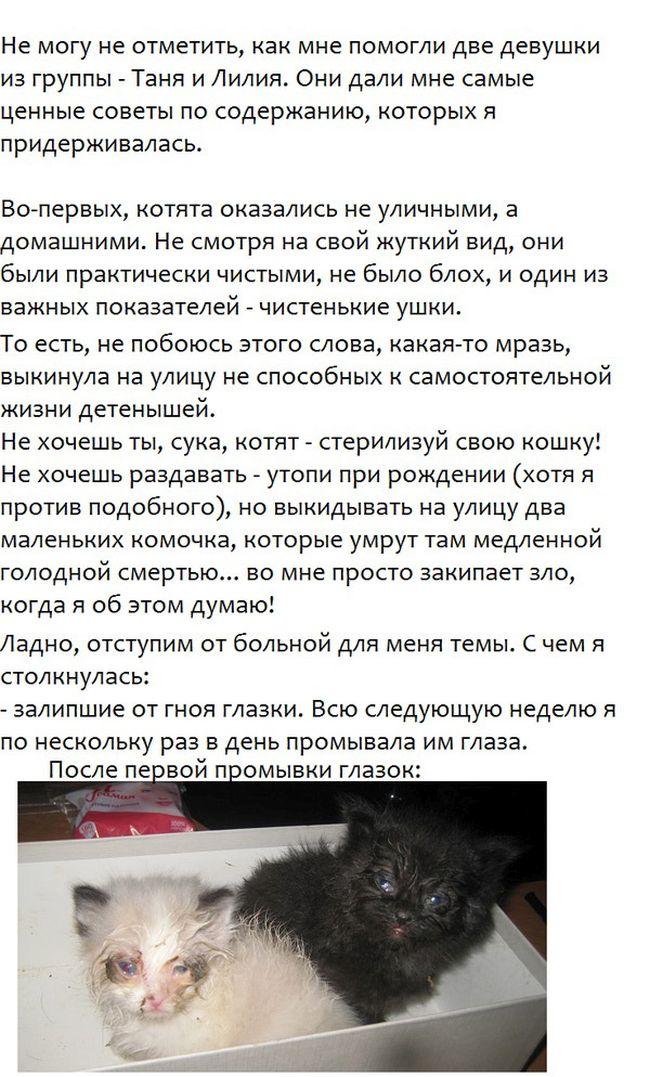 Спасение бездомных котят (5 фото)
