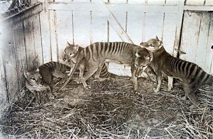 Вымершие благодаря людям животные