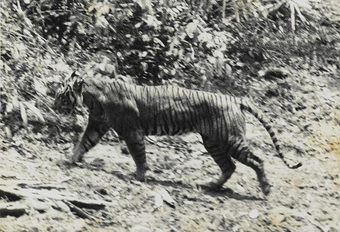 Животные, которых истребило человечество (10 фото)
