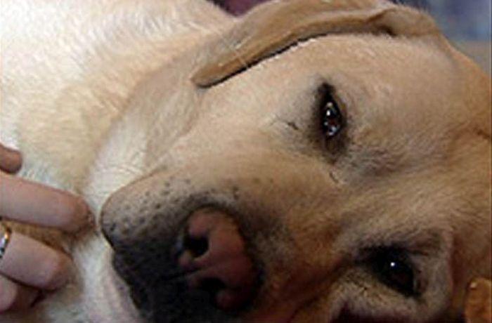 Собаки, которые готовы на всё ради спасения своего хозяина (7 фото)