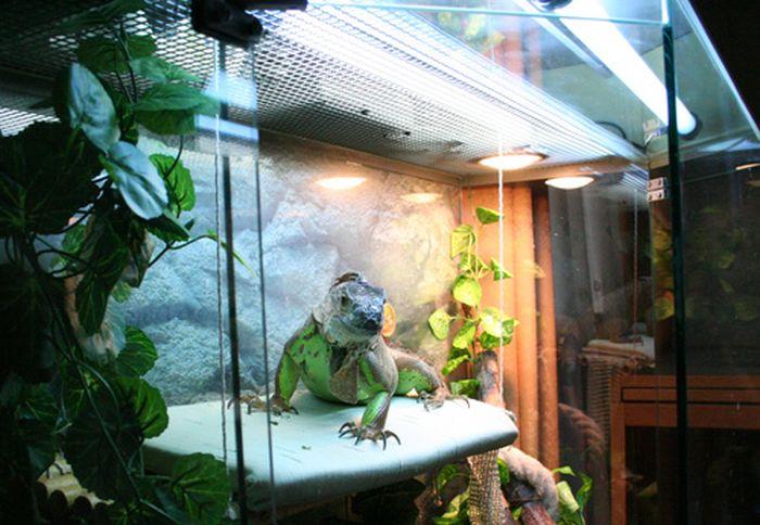 Холодильник любителя змей (2 фото)