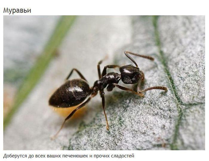 Мерзкие создания, которые могут жить в вашем доме (15 фото)