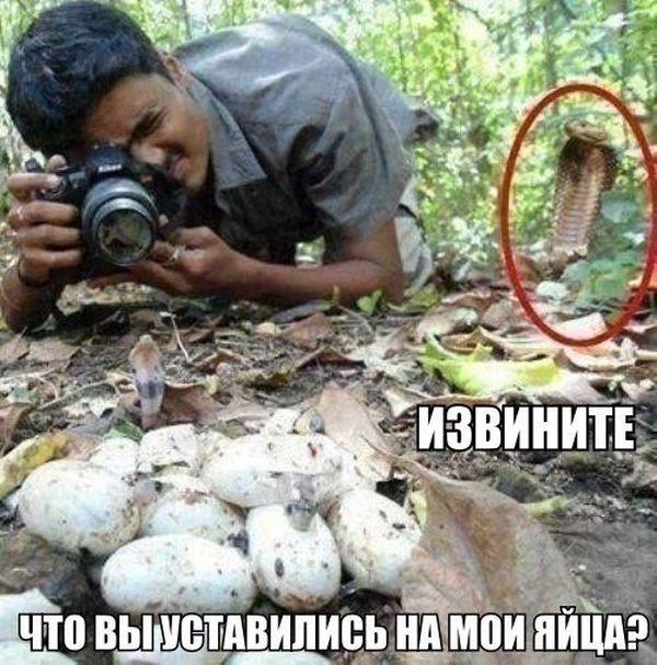 Прикольные картинки (145 фото)