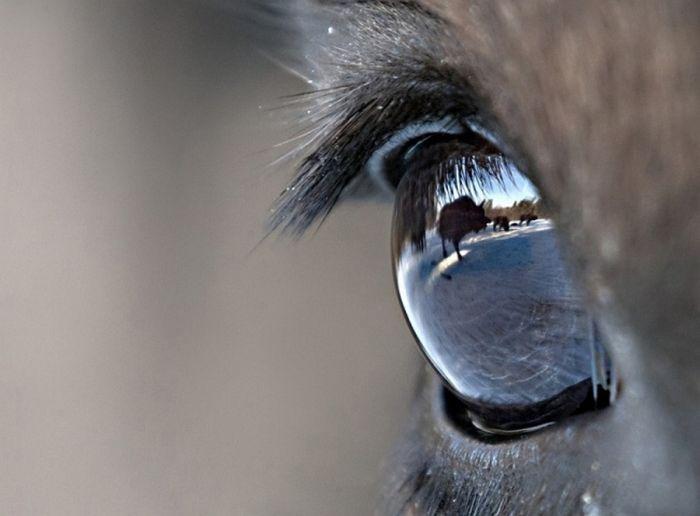Удивительные работы с фестиваля дикой природы (29 фото)