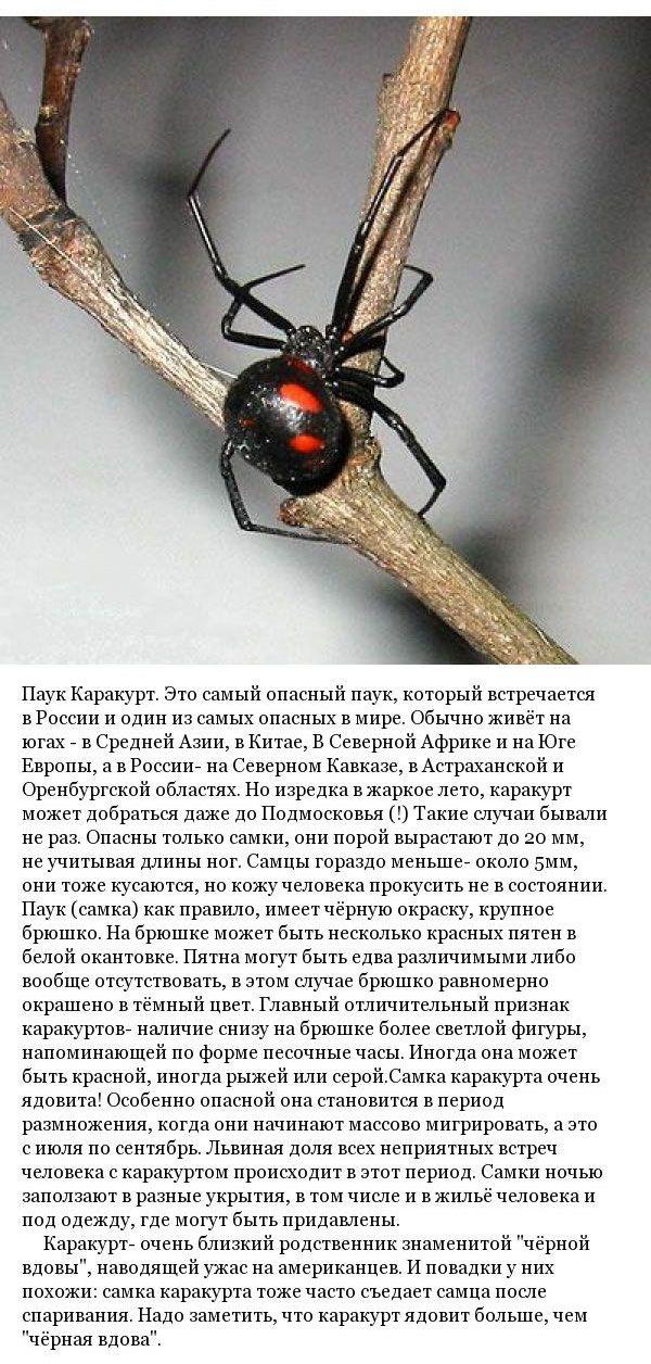 Какие пауки обитают на территории России (9 фото)