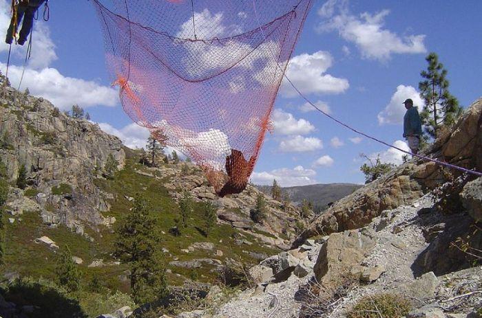 Спасение медведя, застрявшего на мосту (6 фото)