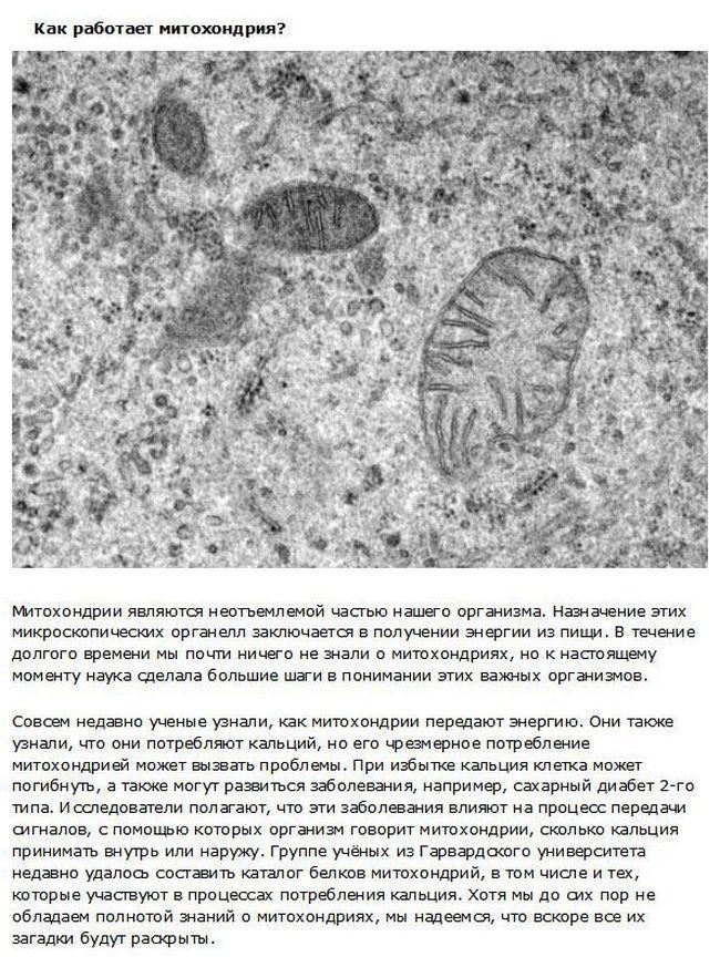 Функции человеческого тела, которые наука не может объяснить (10 фото)