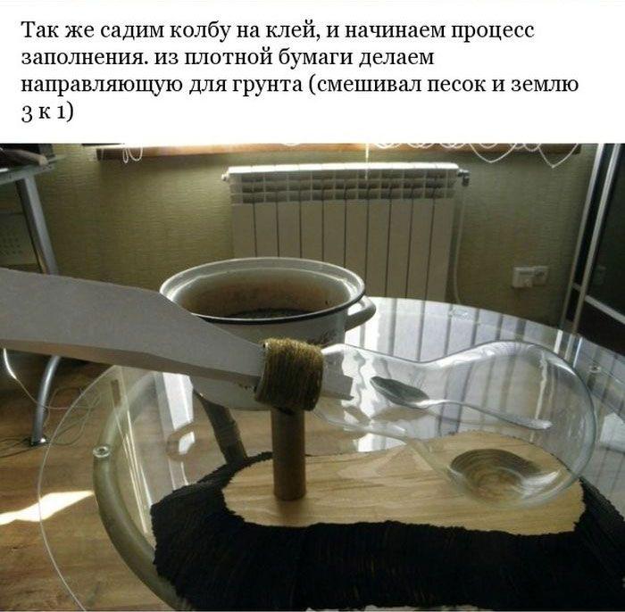 Делаем минисад внутри лампочки (22 фото)