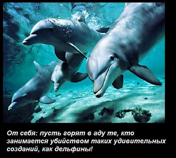 Почему дельфины не боятся акул (5 фото)
