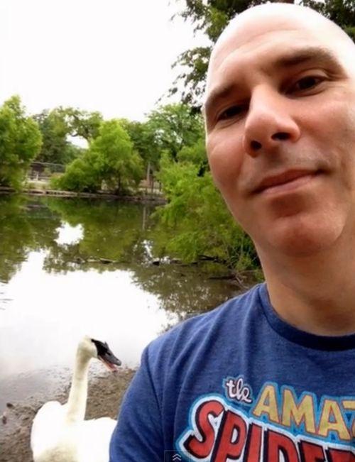 Лебедь, который ненавидит селфи (2 фото + видео)