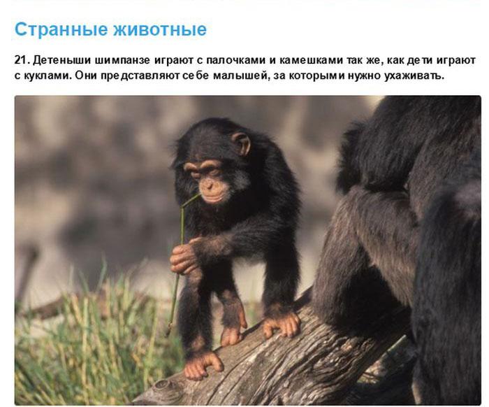 Позитивные факты о необычных зверушках (32 фото)