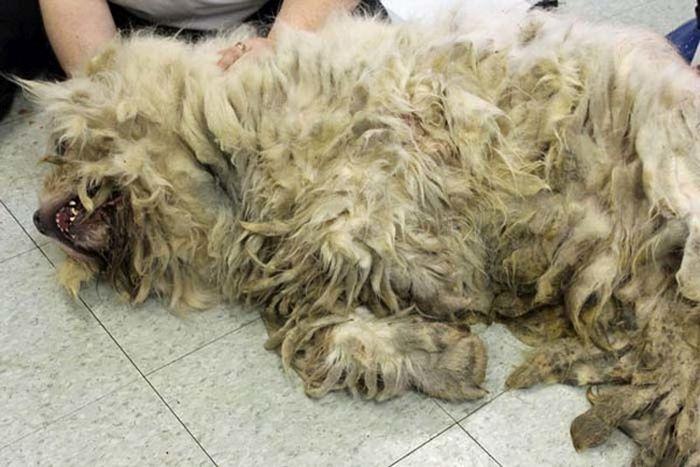 Вторая жизнь бездомного пса (14 фото)