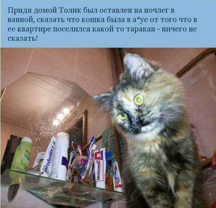 Легендарные приключения Толика (7 картинок)