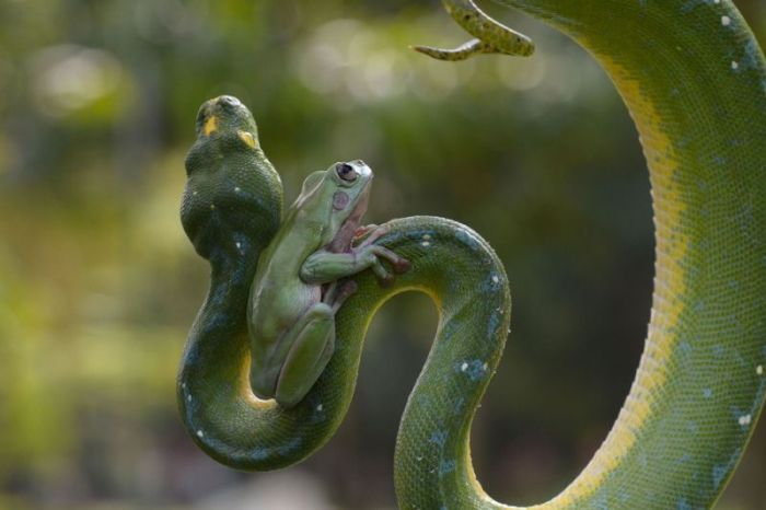 Лягушка и змея (7 фото)