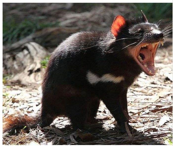 Топ-7 самых зловонных животных в мире (14 фото)