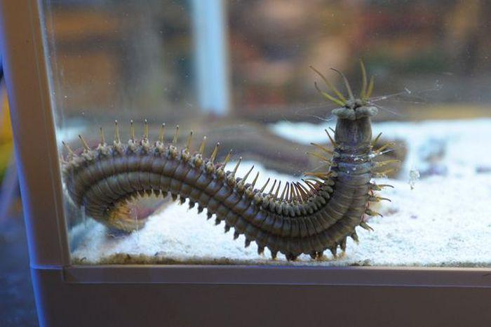 Хищный морской червь (6 фото)