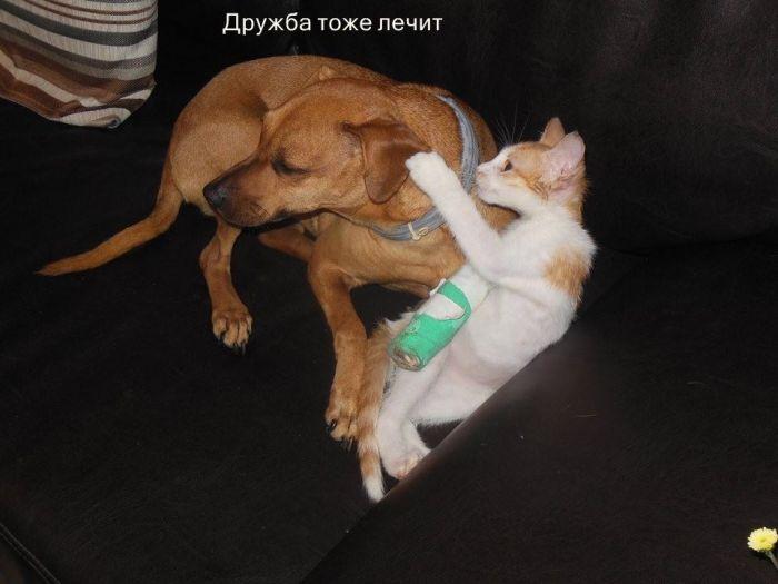 История спасения котенка, застрявшего под капотом автомобиля (8 фото)