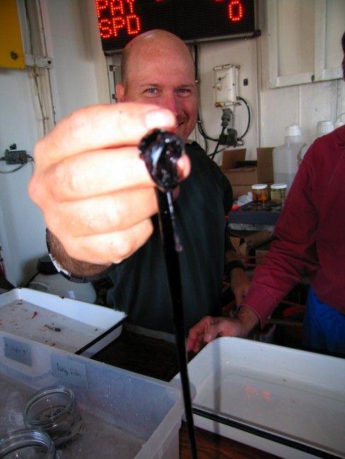 Странное создание, выловленное океанологами из воды (5 фото)