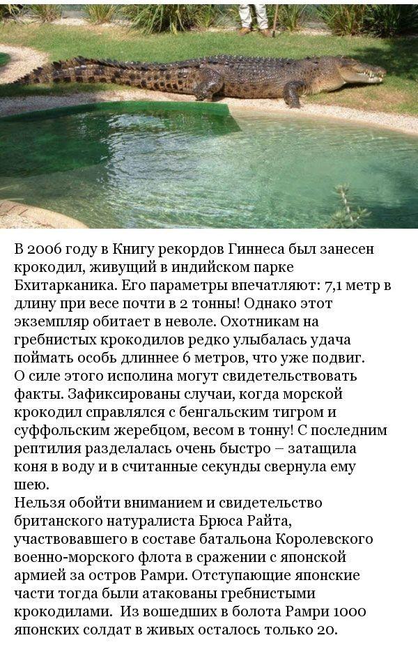 Неизвестные ранее факты о крокодилах (8 фото)