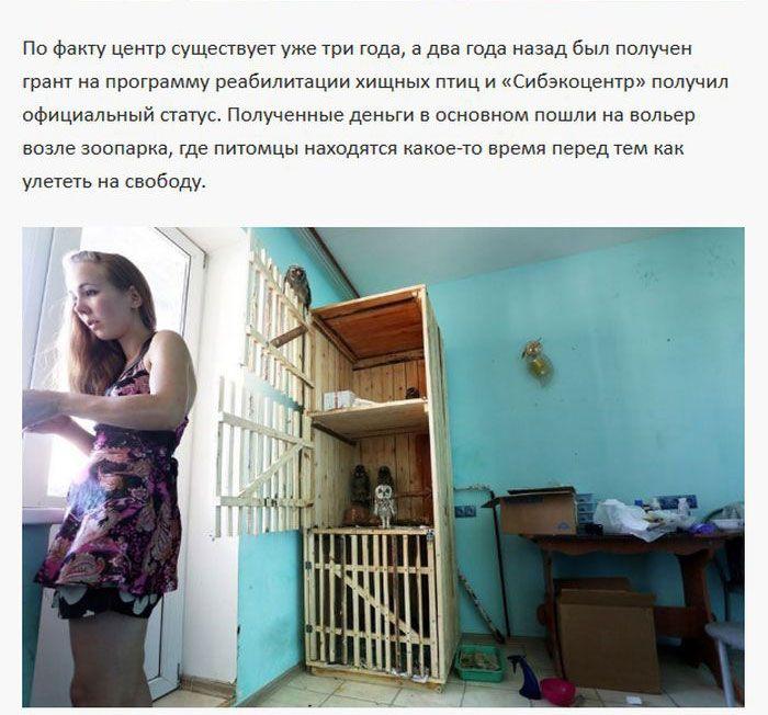 Хищные постояльцы однокомнатной квартиры (11 фото)