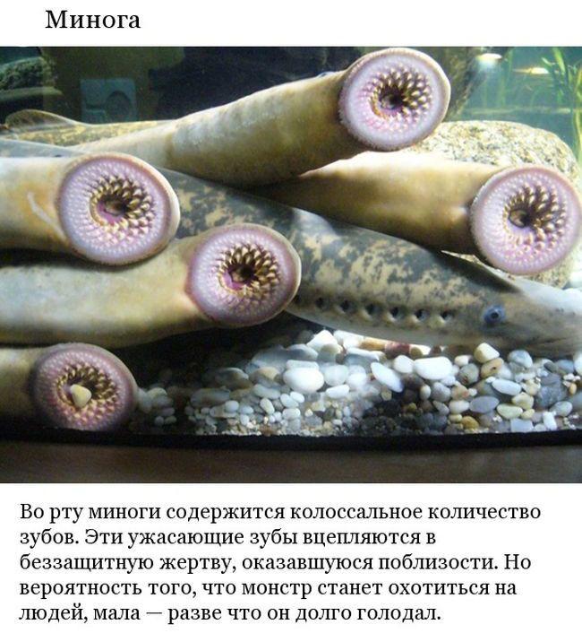 Топ-9 существ, питающихся кровью (9 фото)