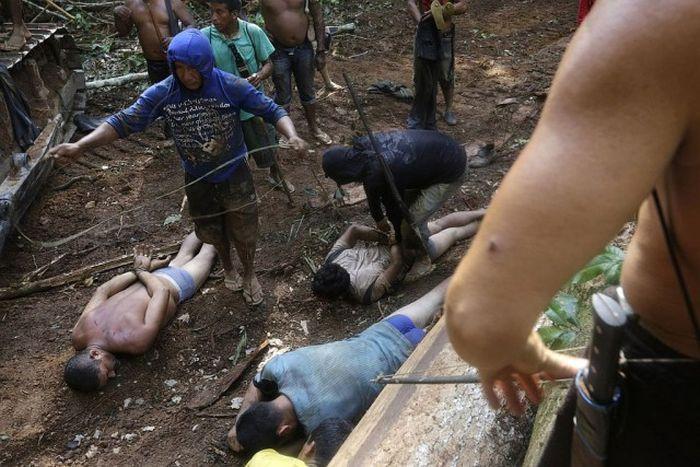 Борьба коренных жителей Амазонки с лесорубами (20 фото)