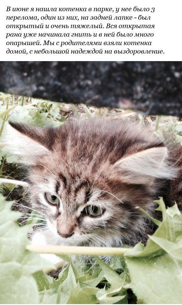 Спасение котенка с переломанными лапами (12 фото)