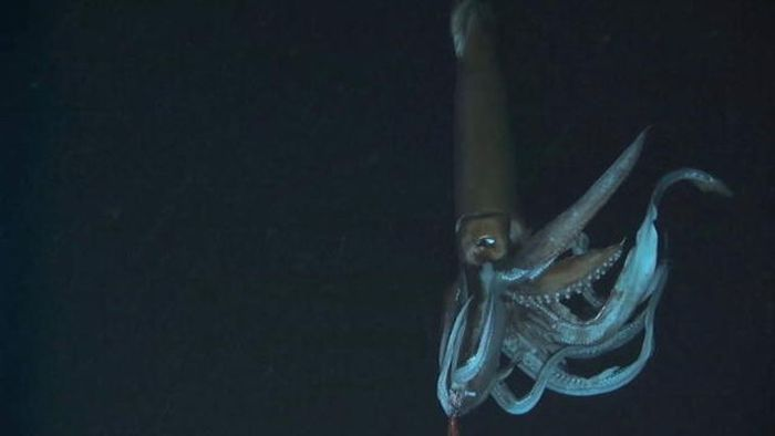 Монстры с океанских глубин (23 фото)