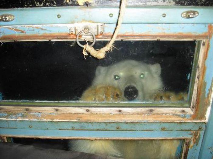 Незваный гость заглянул на метеостанцию в Якутии (3 фото)