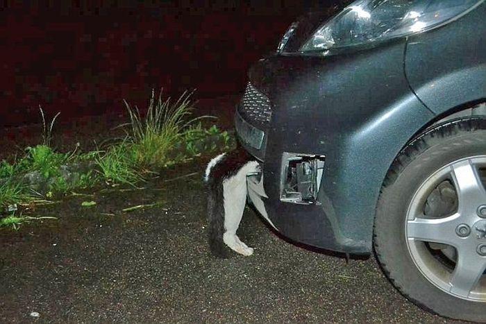 Девушка сбила кота на скорости в 120 км/ч (3 фото)