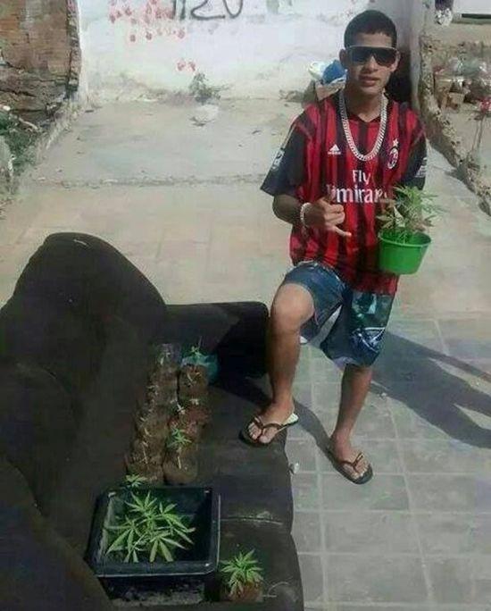 Похвастался урожаем марихуаны в социальных сетях (2 фото)