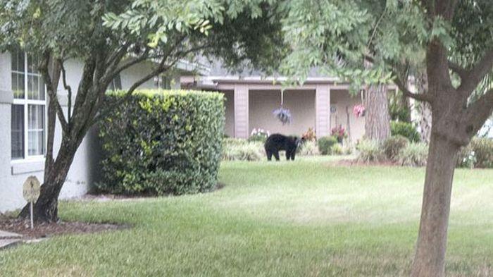 Медведь зашел в гости (5 фото)
