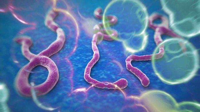 Факты о вирусе Эбола (10 фото)