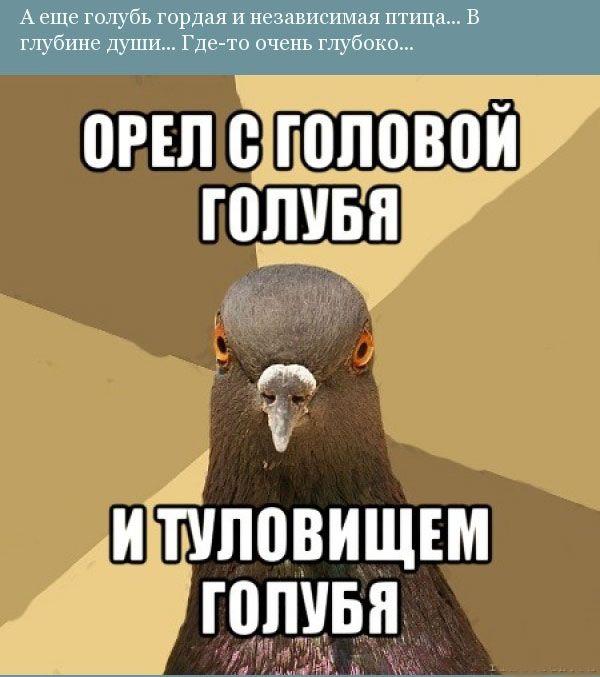 Прикольная орнитология (12 фото)